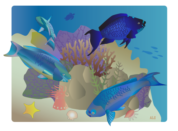 Four Parrotfish Illustration